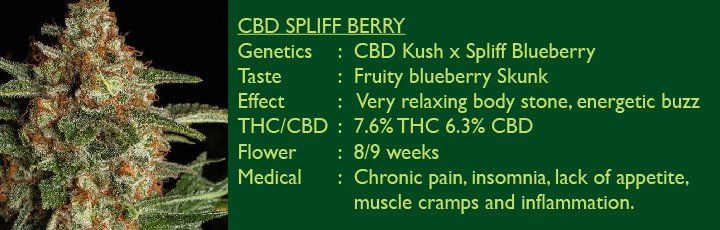 CBD Spliff Berry