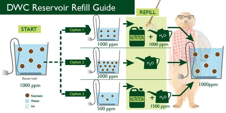 Setting Up Deep Water Culture (DWC) In 5 Easy Steps