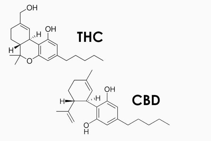 THC and CBD are the main active molecules in medical marijuana