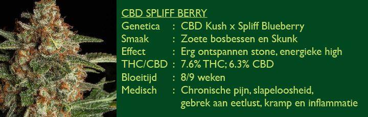 CBD Spliff Berry