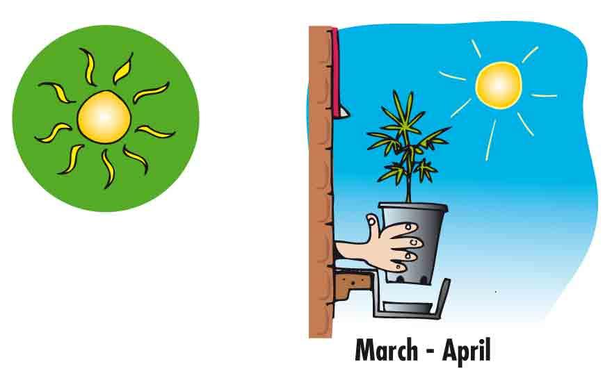 Marijuana Growing Guide