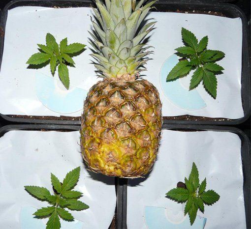 Sweet n sour pineapple