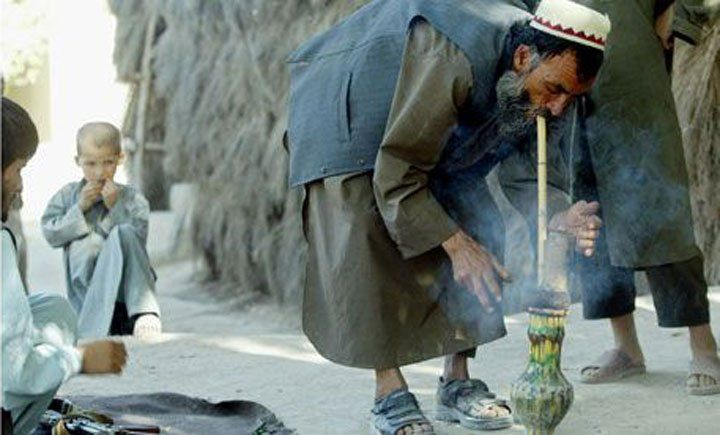 Afghani cannabis farmers