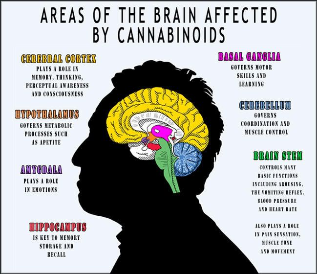 Areas of the brain affected by cannabinoids