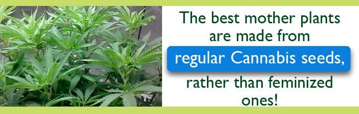 Click Here To Get Your Regular Seeds