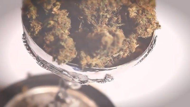 Cannabis Cup 2010