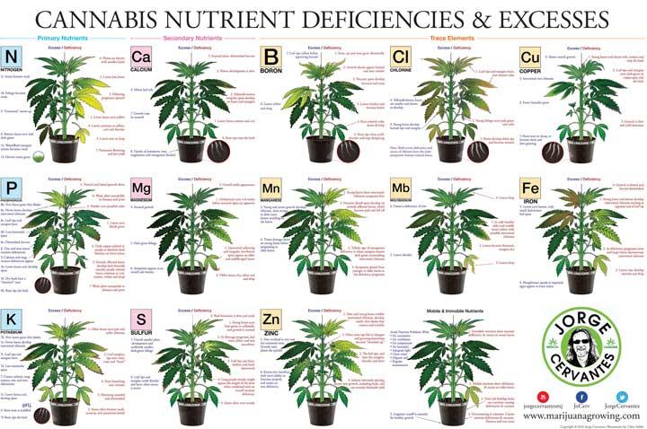 Cannabis Plant Deficiencies