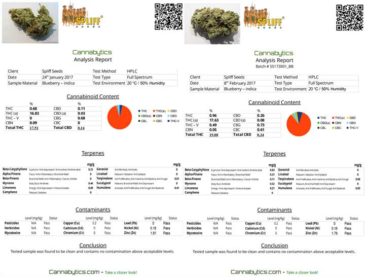 Two Cannabis Test Report Of The Same Strain