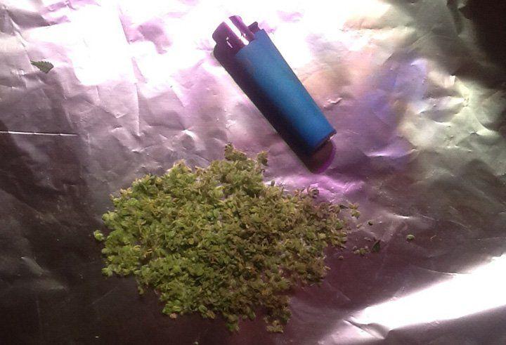 Feminzed Cannabis Pollen