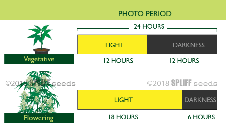 Hours Of Light for Vegetative Growth vs Flowering