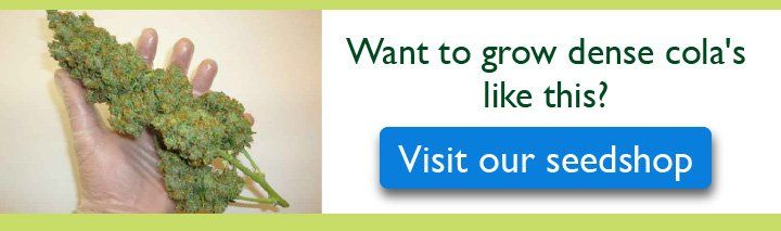 Visit Our Seedshop