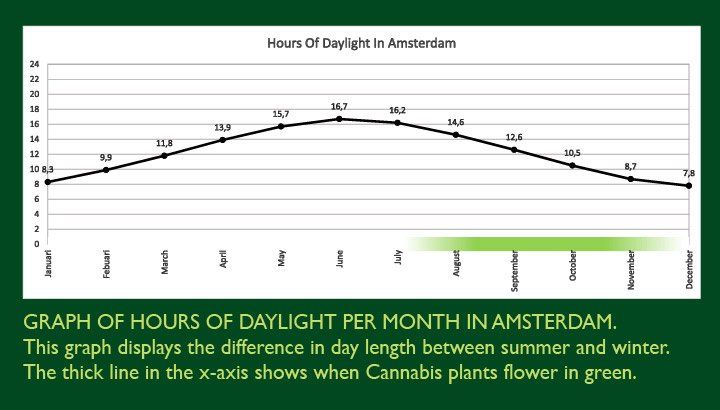 Growing marijuana outdoors & daylight