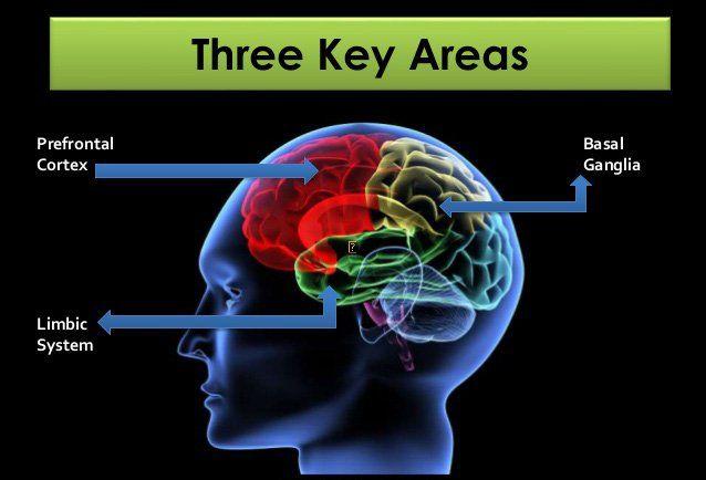 Central nerve system