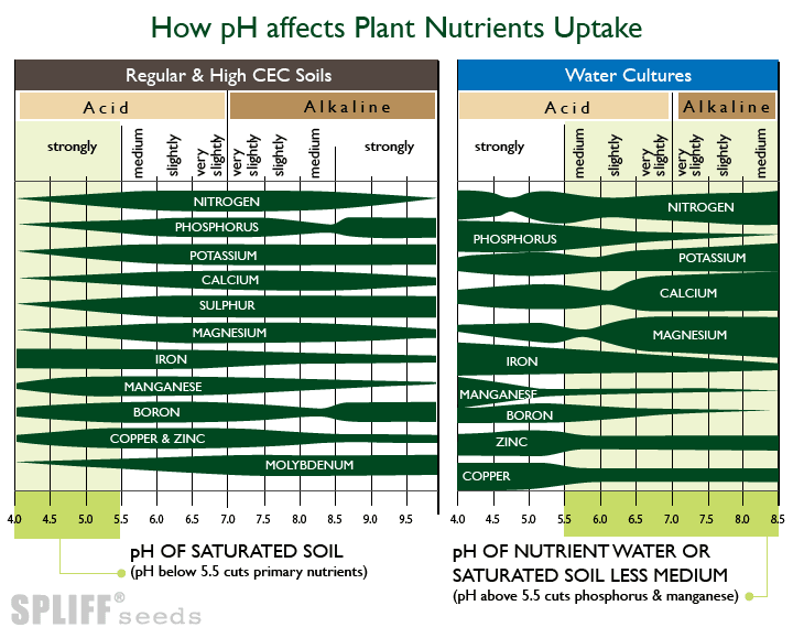 Best pH For Absorption Cannabis Nutrients