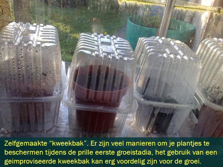 Wiet Kweken In Zelfgemaakte Kweekkas