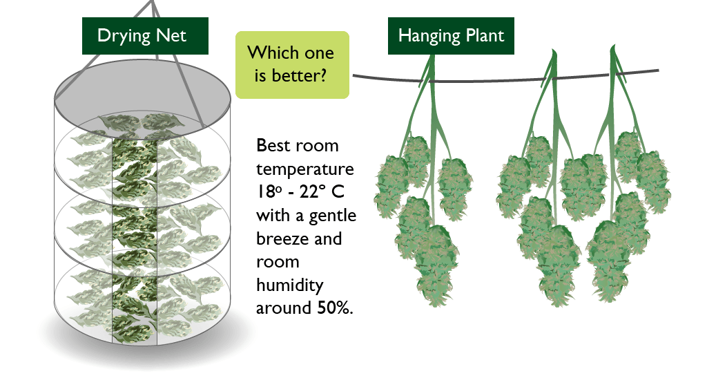 Drying cannabis net vs hanging cannabis buds