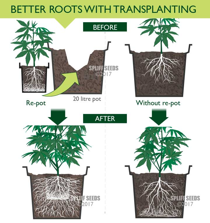 When To Re-Pot